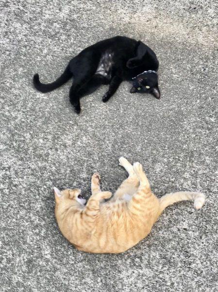 茶トラのゴッちゃんと、黒猫のケンちゃん