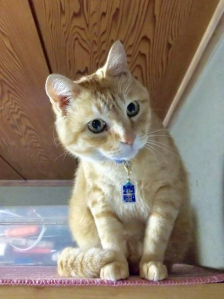 飼い猫として暮らすゴッちゃん
