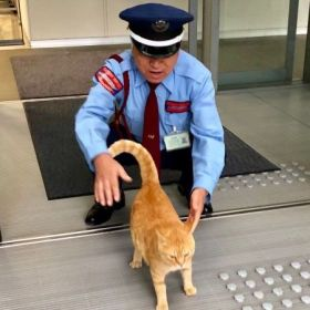 猫と警備員、ほっこり攻防の日々