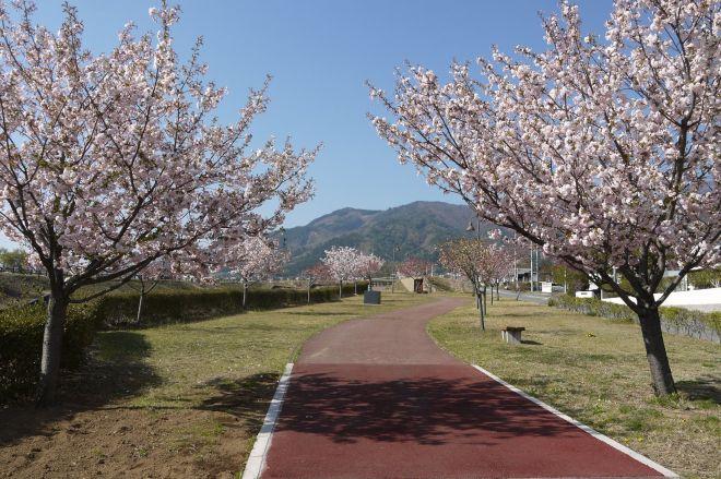 こちらが「幸福の小径」。中央奥に見えるのが「韮崎の木」です