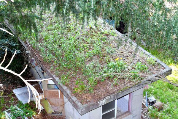 敷地内には屋上が草で覆われている建物もあり、廃虚感を醸し出している