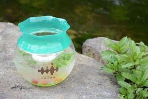 いわしパフェの京都水族館、今度は「オオサンショウウオ鴨川ソーダ」