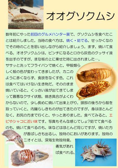 オオグソクムシを食べた時のリポート