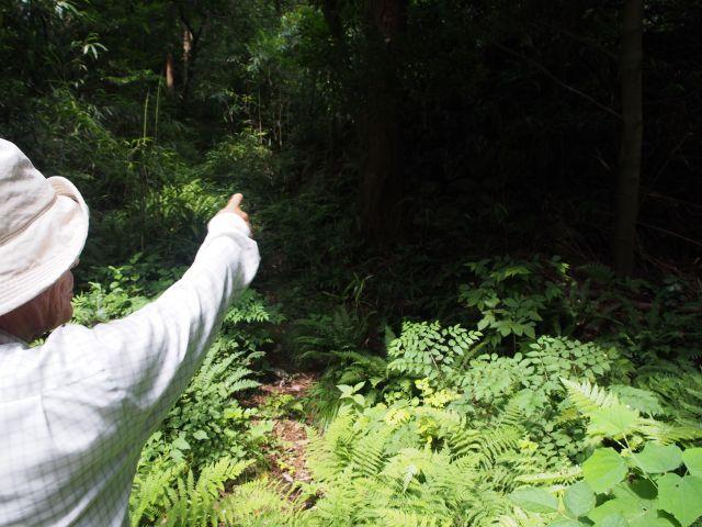 草むらを案内する山田さん
