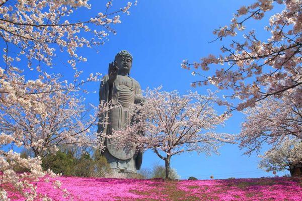 花々に囲まれ、優しげな表情を見せる「牛久大仏」(茨城県牛久市)。台座を含め、全長は約120メートル。世界一高い青銅製の像として、ギネスにも認定されている。