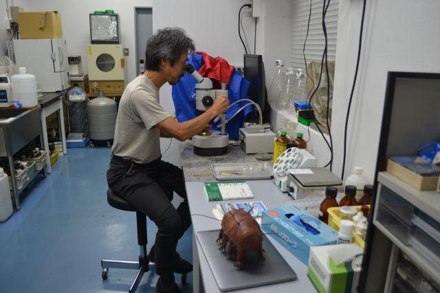 実体顕微鏡をのぞく鈴木先生。手前には知人からもらったという、革製のクマムシのぬいぐるみが見守る