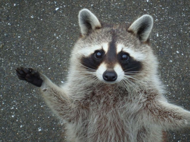 右前脚で「挙手」するカルー