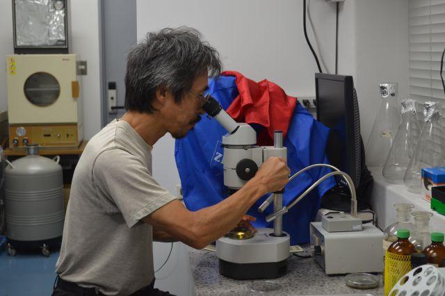 実体顕微鏡でクマムシを探す鈴木先生