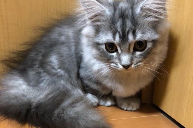 よききさんの愛猫「シュガーちゃん」
