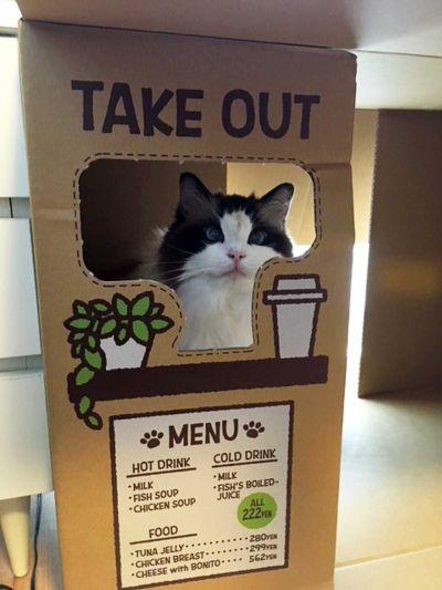 テイクアウトの受け渡し口から顔を出す猫