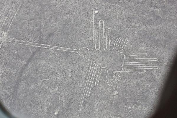 ペルーにある世界遺産「ナスカの地上絵」のハチドリ