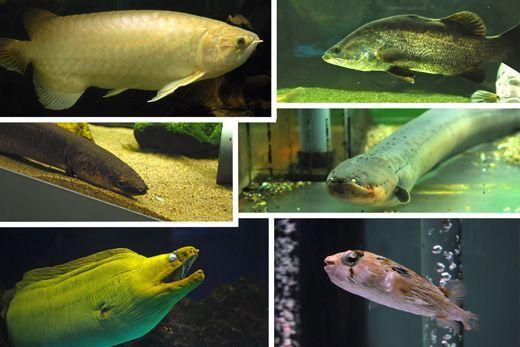 東京タワー水族館からしながわ水族館に譲渡された生き物たち