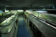 すべての生き物の譲渡を終えた後の東京タワー水族館