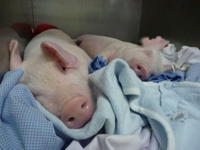 実験動物」に言い続ける「ごめんね」 それでも辞めない理由
