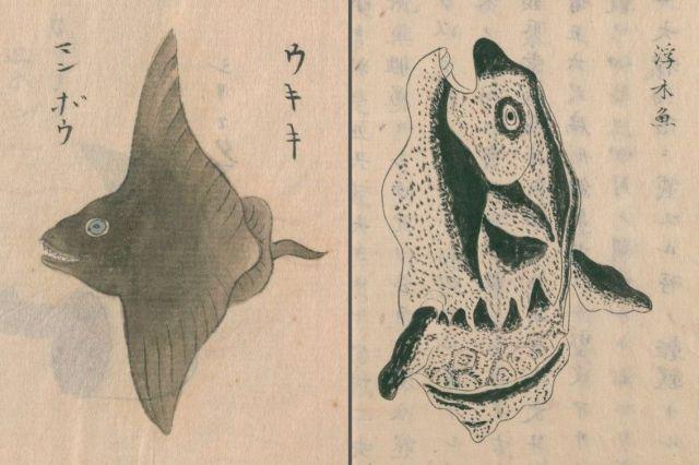 古文献で「マンボウ」として描かれている絵。(左)神田玄泉1741a『日東魚譜』巻五(写本作成年不詳)、(右)阿部照任・松井重康1758e『採薬使記(序文不詳)』巻中(写本作成年不詳)