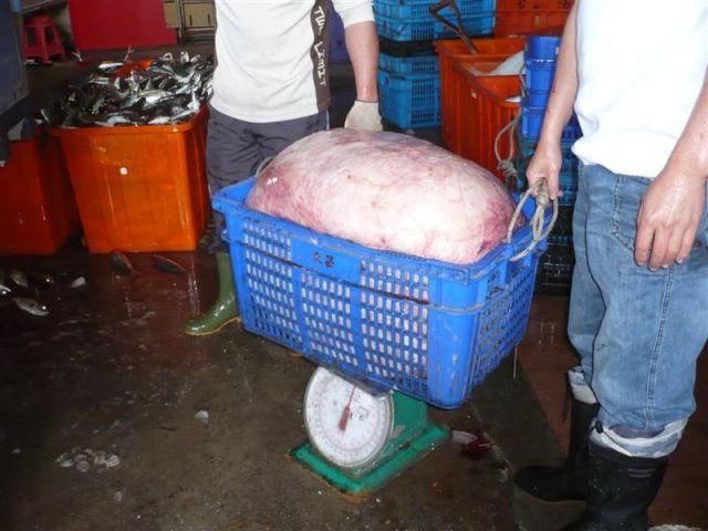 2008年、台湾で漁獲されたウシマンボウの117kgの卵巣