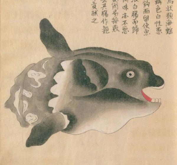 古文献で「マンボウ」として描かれていた絵。後藤梨春1762-1771b『随観写真(序文不詳)』魚部四巻(写本作成安政五年以前)