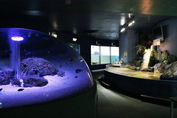 新屋島水族館の館内