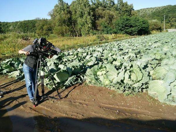 9月の畑。収穫まであとわずか=札幌大球応援隊提供