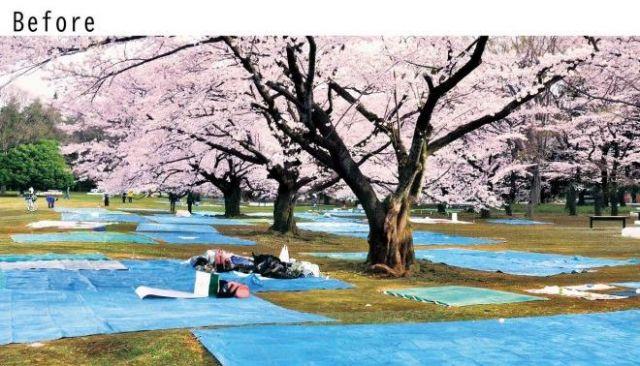 ブルーシートが広がる花見の様子