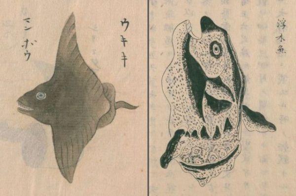 古文献には他にも「マンボウ」が残されている。(左)神田玄泉1741a『日東魚譜』巻五(写本作成年不詳)、(右)阿部照任・松井重康1758e『採薬使記(序文不詳)』巻中(写本作成年不詳)