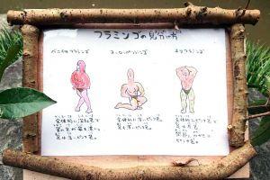 フラミンゴの見分け方、キレッキレすぎ! 飼育員の脱力マッチョ解説