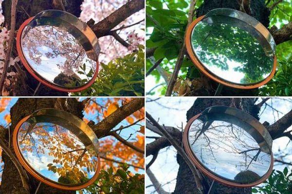 ミラーの中に写っているのは同じ桜の木ですが、季節ごとに花や葉の違いが確認できます