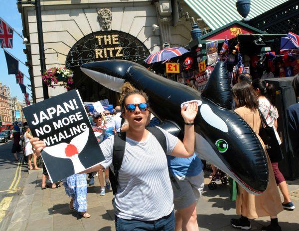 日本の商業捕鯨再開に反対するデモ参加者=2019年6月29日、ロンドン中心部、下司佳代子撮影