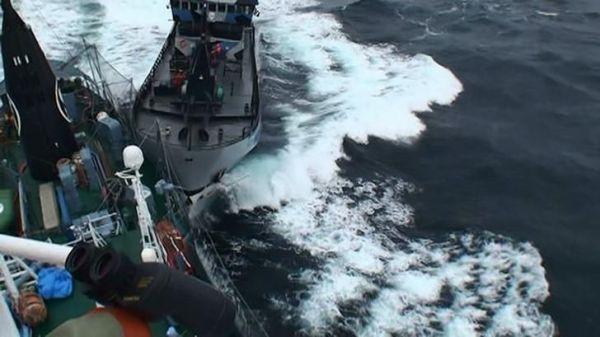 船首から「突入」してきたシーシェパードの船=2014年2月、ロイター