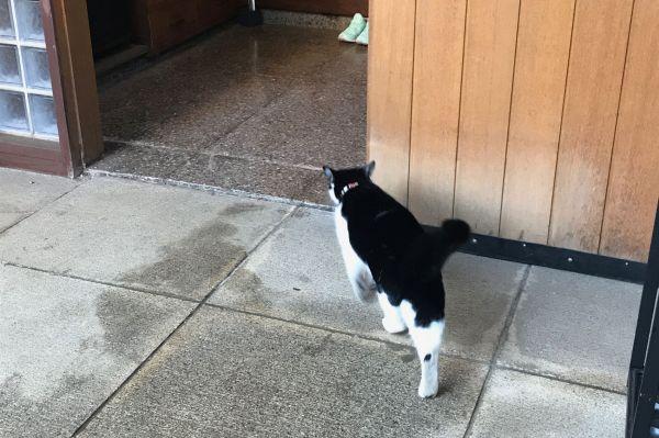 旧江戸川乱歩邸に侵入を試みる猫