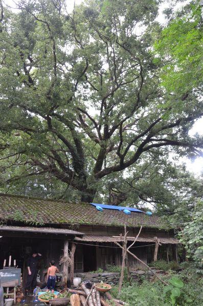 林田さんが暮らした天心館。現在の天心館は、里山周辺の別の場所にある