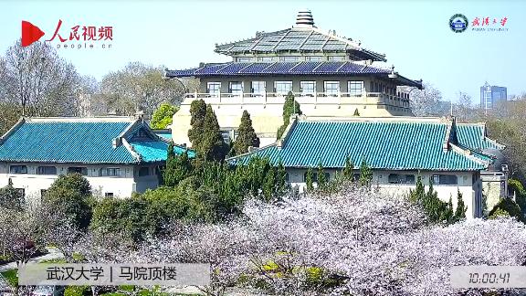 ライブ中継していた武漢大の桜