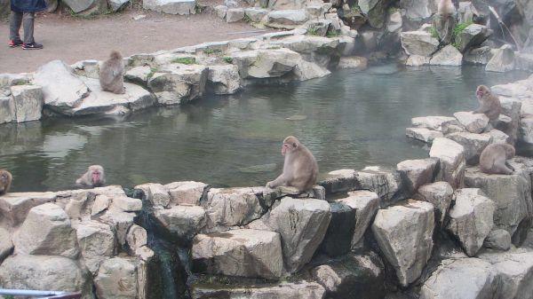地獄谷野猿公苑(長野県下高井郡)のライブカメラの画像