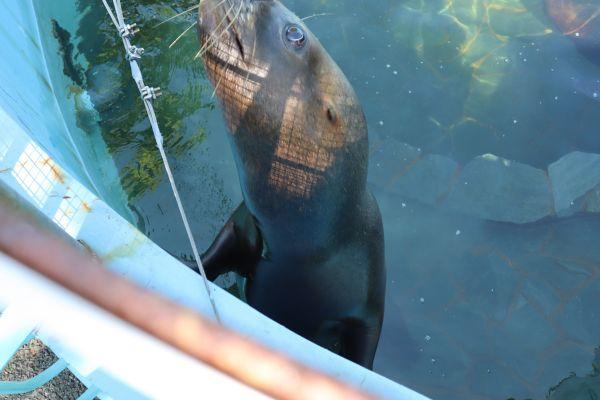 休園中の江戸川区自然動物園のオタリア