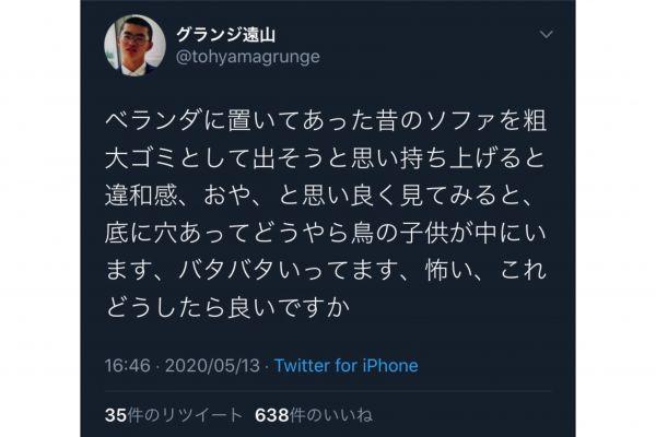 グランジ・遠山大輔さんのツイッターでは、ベランダのソファに鳥の子どもが住みつき、戸惑う様子がつぶやかれています