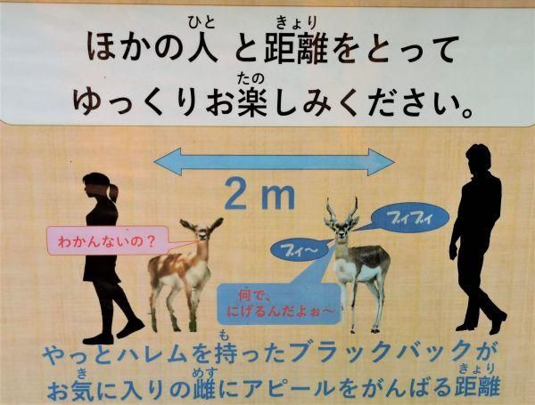 広島市安佐動物公園が作成した、社会的距離(ソーシャルディスタンス)を園内の動物にたとえ説明する看板の画像