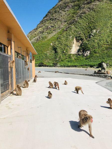 施設の周辺では、サルたちが自然な状態でたたずむ。人に慣れており、訪問客の背中によじのぼってくることもあるという。