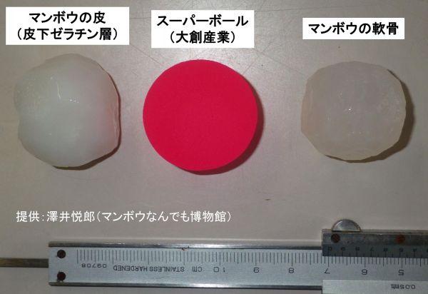 マンボウの軟骨から作られたボール(左)