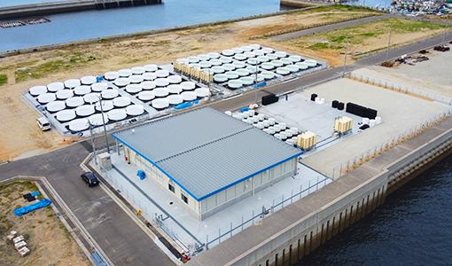 2020年6月からスジアオノリの陸上養殖を始めた、走島海洋資源開発センター=広島県福山市