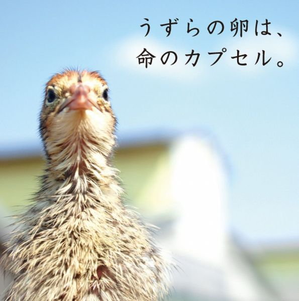 浜名湖ファームが販売しているウズラの卵「命のカプセル」のイメージ画像