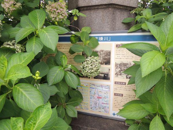 「京橋」の交差点で見つけた、かつての「河岸」の説明板。植物に覆われていた