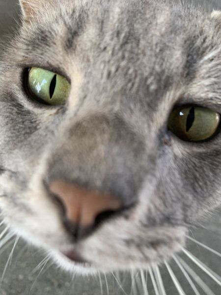 「中の人」が投稿した猫の写真「突然カメラに興味を示したかと思ったらその場にごろん」