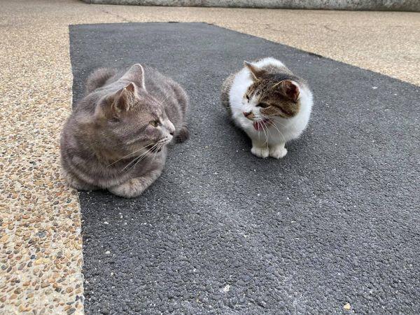 「中の人」が投稿した猫の写真「さくら耳になりました」