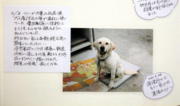 亡くなった愛犬リリーの写真が貼られたアルバム=2020年9月、福島県大玉村、三浦英之撮影