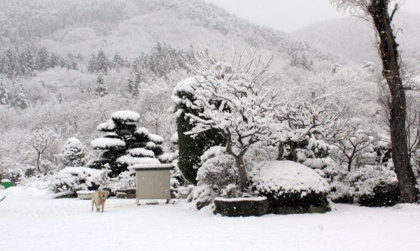 2011年3月16日早朝、旧津島村に降り積もった雪と愛犬リリー。この中に大量の放射性物質が含まれていたとみられている(今野秀則さん撮影・提供)