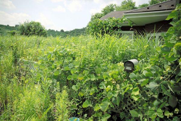 夏草に覆われた今野美智雄さんの自宅=2020年8月、福島県浪江町、三浦英之撮影