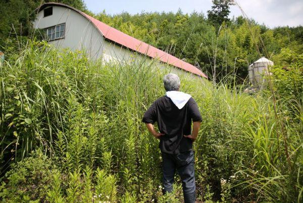 自宅前の牛舎に立ち寄ろうとした今野さん。夏草が生い茂り、前に進めなかった=2020年8月、福島県浪江町津島地区、三浦英之撮影