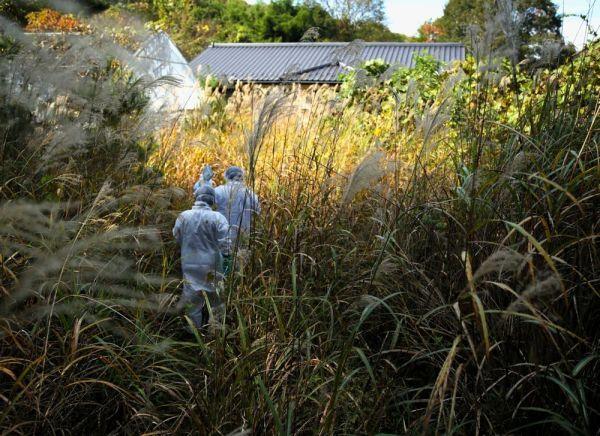 三瓶春江さんの実家は背丈を超える高さのススキに覆われていた=2020年10月、福島県浪江町、三浦英之撮影