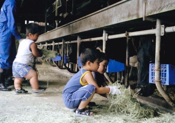 津島で家業の酪農を手伝う門馬和枝さんの長男(左)=2007年、門馬さん提供