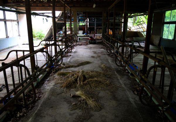 主や牛を失い、ガランとした牛舎=2020年7月、福島県浪江町、三浦英之撮影